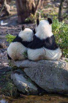 Ravenwhimsy's Wonderful World - Pandas Niedlicher Panda, Panda Love, Cute Panda, Cute Baby Animals, Animals And Pets, Funny Animals, Wild Animals, Beautiful Creatures, Animals Beautiful