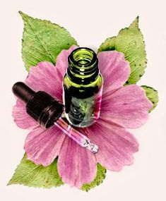 Beauty Light, Nature Green, Bach Flowers, Mountain Love, Flower Quotes, Reiki, I Shop, Perfume Bottles, Remedies