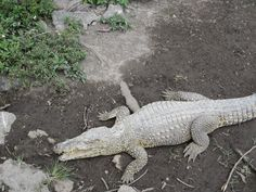 Day #7 - Watching @Everglades Safari Park