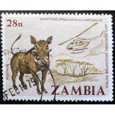 Zambia, Wild Life, Warthog, Anti-poaching helicopter patrol, 1978 used