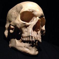 Resultado de imagem para human skull: