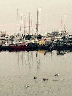 Foggy day in Lund, BC Canada . Mile 0 hwy101