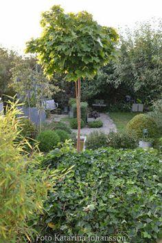 Katarinas trädgård: Nu har jag passerat 100