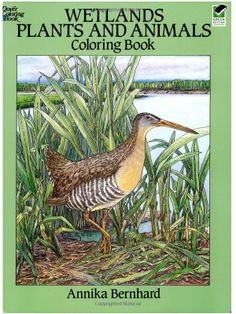 Wetlands Plants And Animals Coloring Book Dover Nature Annika Bernhard