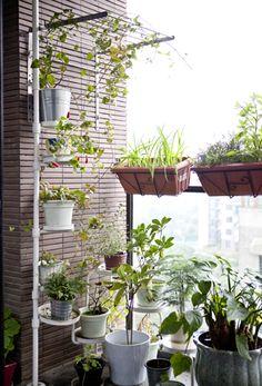 Optez pour un mur végétal