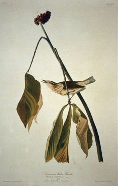 Audubon Birds, Birds Of America, John James Audubon, Birds 2, Flora And Fauna, Color Shapes, Library Of Congress, Louisiana, Elephant
