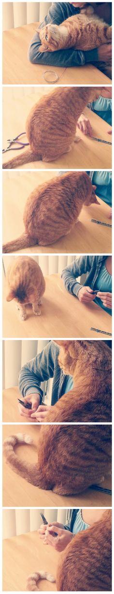 Kitty boredom