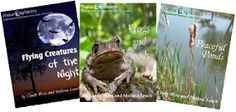 Nature Study Scavenger Hunt Ideas | The Holistic Homeschooler