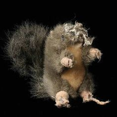 Quantos bichos de pelúcia ou brinquedo seu animal de estimação ja mastigou até arrancar a cabeça? Incontáveis, aposto! Veja a série de fotografias que resultou em um livro.