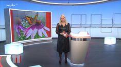 "Anja Petzold @ ""mdr um am - Teil - Bilder - Papa Pauls TV-Moderatorinnen Forum Anja Petzold, Free Pictures, Free Images, Papa Paul, Celebs, Lady, Celebrities, Celebrity"