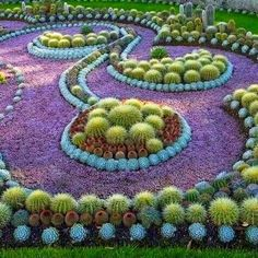Beautiful Cactus Succulent Garden...How much time does this person have on their hands??? What a labor of love!
