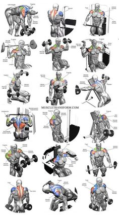 Workout Exercise Shoulder workouts to target specific muscle. - The Ultimate Shoulder Workouts Anatomy. We've put together this graphic of different types shoulder workouts. Knowing the anatomy of each muscle group is Fitness Workouts, Weight Training Workouts, Gym Workout Tips, Biceps Workout, Fitness Motivation, Sport Motivation, Traps Workout, Workout Routines, Workout Plans