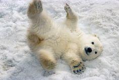 Polar bear cub. So cute!