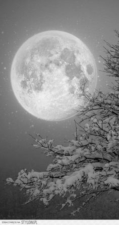 Black and white Moon winter scape Moon Moon, Moon Rise, Blue Moon, Beautiful Moon, Beautiful World, Beautiful Scenery, Beautiful Images, Winter Moon, Deep Winter