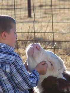 A little boy and a Hereford...Awww.