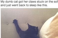 Just 19 Cats Stuck In Things