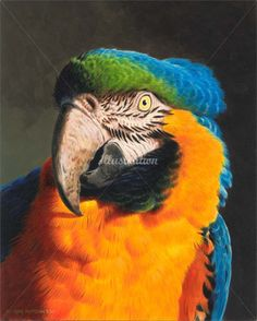 Acrylic painting - Parrot Illustration, Birds and Wildlife Images © Andrew Hutchinson