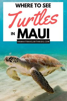 Planning a trip to Maui? It's one of the best places to see Hawaiian green sea turtles! Find out where to see turtles in Maui, including the best Maui beaches and Maui snorkeling tours. You won't want to miss out on this unique Hawaii experience! Hawaii Tourism, Hawaii Travel Guide, Maui Travel, Travel Usa, Hawaii Life, Maui Hawaii, Oahu, Lahaina Maui, Trip To Maui