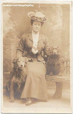 Golden Retriever and Sussex Spaniel type, c.1905