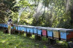 Renee Ricciardi Italy Beekeeper Cinque Terre http://www.thefoodtravelcompany.com/blog/its-honey-honey/