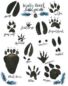 Woodland Nursery Animal Track Field Guide Watercolor Wildlife Art Spruce Blue