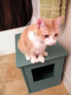 Cat litter boxes are typically pretty ugly. We came up with a design for a diy kitty litter box and we are loving it... and so is the cat.