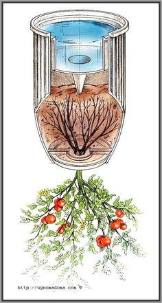 Помидоры вверх корнями – - All About Gardens Vertical Vegetable Gardens, Home Vegetable Garden, Growing Vegetables, Growing Plants, Tomato Planter, Aquaponics Diy, Container Gardening Vegetables, Diy Garden Projects, Organic Gardening