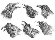 Image result for raven illustration