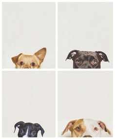 mishproductions: handsomedogs: Portraits Of My Dogs / / Jasmine Jones