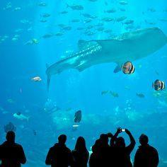 The Georgia Aquarium is the largest aquarium in the world (101 Things to Do in Atlanta) // localadventurer.com
