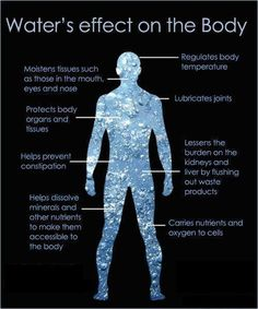 Water is important for good health. Are you aware that of your body weight is made up of water? Water is needed to regulate the body temperature, blood pressure and digestion, and it can also help with keeping your Health And Nutrition, Health And Wellness, Health Tips, Health Fitness, Nutrition Classes, Fitness Foods, Health Class, Men's Fitness, Nutrition Guide