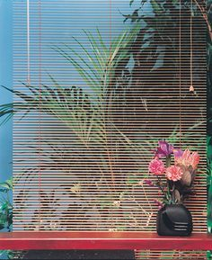 palm trees / blinds / flowers / summer