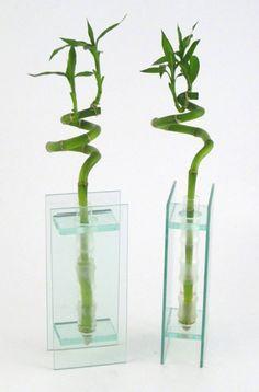 Lucky Bamboo- Modern Vase