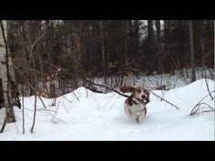 McCrea the Basset Hound Runs Through Deep Snow in Slow Motion
