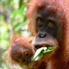 Sie kam einfach auf uns zu ... auf unserem Weg  & wir waren ganz alleine .... Orang Utan, Animals, Round Trip, Travel Destinations, Simple, Animales, Animaux, Animal, Animais