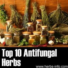 Top 10 Antifungal Herbs