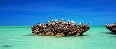 Cosmoledo is an important bird area and holds Seychelles' largest colonies of all three species of booby that breed in Seychelles, including the last viable population of Brown Booby. Enjoy bird watching excursions with an expert guide. Seychelles Islands, Sea Birds, Bird Watching, Safari, Wanderlust, Brown, Brown Colors