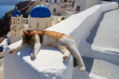 Beautiful Greek Cats of Santorini Island Stunning Photos) Cat chilling on the white steps of Fila in Santorini, Greece.Cat chilling on the white steps of Fila in Santorini, Greece. I Love Cats, Crazy Cats, Cute Cats, Funny Cats, Funny Animal, Kittens Cutest, Cats And Kittens, Cats Bus, Santorini Island