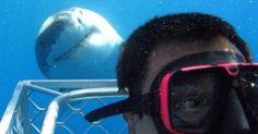 Tubarão intrometido invade selfie de mergulhador