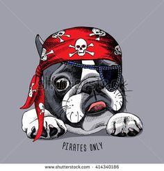 French Bulldog portrait in a pirate bandana. French Bulldog Drawing, Merle French Bulldog, French Bulldog Puppies, Animal Paintings, Animal Drawings, Pirate Bandana, Boston Terrier Pug, Bulldog Tattoo, Image Fun