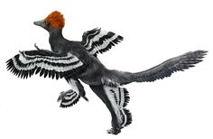 Anchiornis - Zhao Chuang
