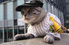baseball player kitty costume!