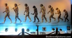 Sangiran is the home for early human or early Java man. Archeologist had found the missing link of human evolution here. As we know, human evolution started from monkey-like Ramapithecus to human-like Homo Sapiens. Charles Darwin was wrong in classifying the missing link of human evolution. The later scientist stated that human in Africa and Sangiran is the missing link between early human and human today. The missing link is called Homo Erectus