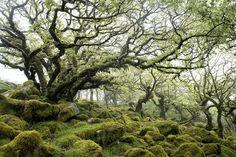 Wistman's Wood, Dartmoor  #WildWomanSisterhood