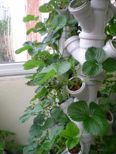 The Advantages Of Growing Food Indoors With Hydroponic Gardening Garden Art, Growing Food, Hydroponic Gardening, Garden Design, Vertical Garden, Farm Gardens, Plants, Urban Garden, Garden Projects