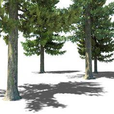 Pine Trees Plants 3D Models
