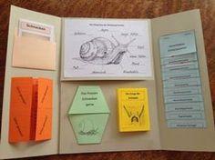 schmetterling-lapbook-innen-kigaportal-kindergarten-blau | sommer sonne sonnenschein | pinterest