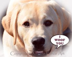 I WOOF YOU LABRADOR Greeting Card Animal by overthefenceart