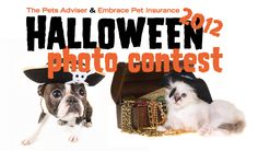 2012 Halloween Pet Costume Contest - Win $1,000 for Your Favorite Shelter!