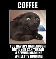 LOL! Can't stop laughing! More More #coffeehumor #funnycatscan'tstoplaughing